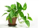 Feng Shui Friendly House Plants